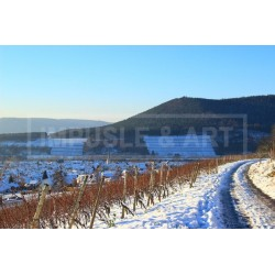 WEINBERGE IM WINTER -...